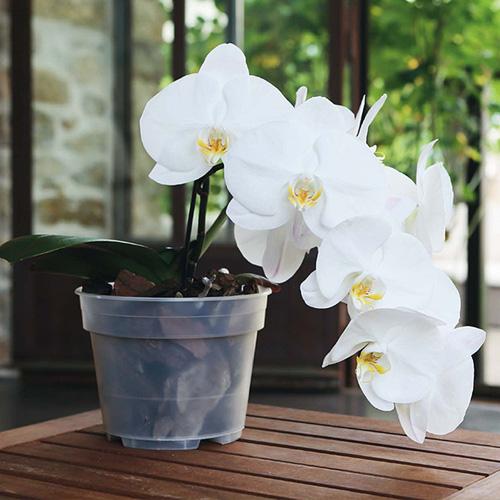Pot à Orchidée